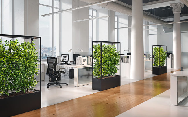 Lasfera Cube Planted Pflanzenleute als Raumteiler im Büro